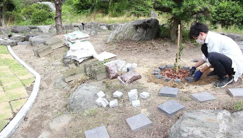 ポンカンの木を植える