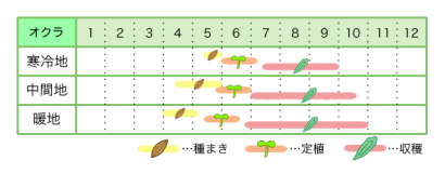オクラ 新規就農レッスン 栽培カレンダー