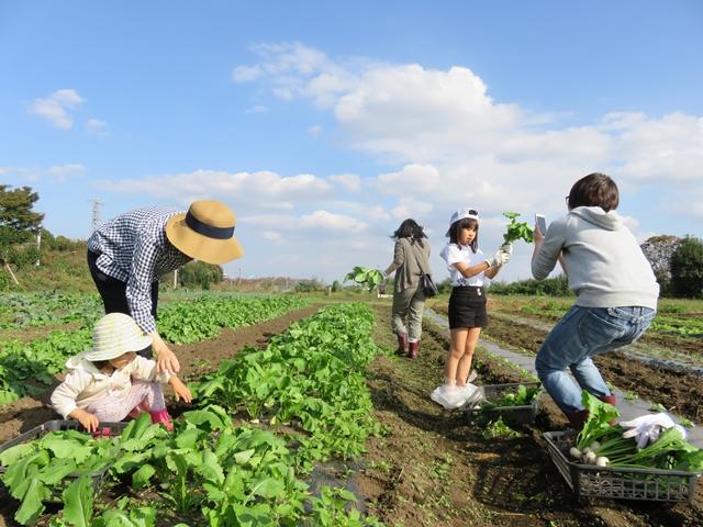 収穫体験をする家族