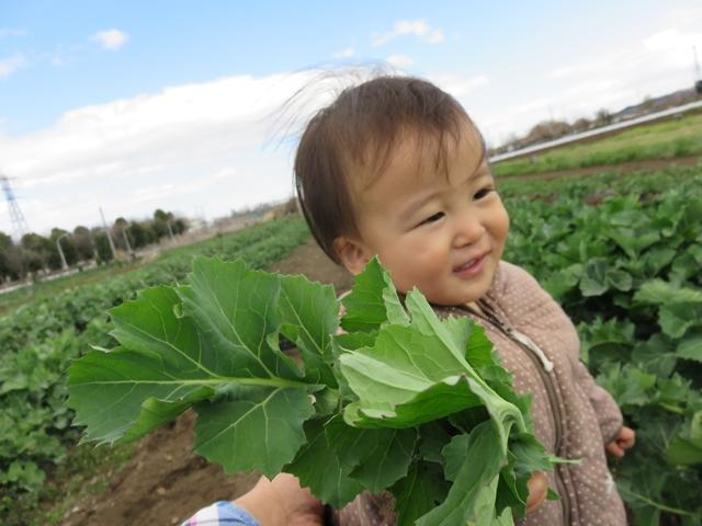 収穫体験をする子ども
