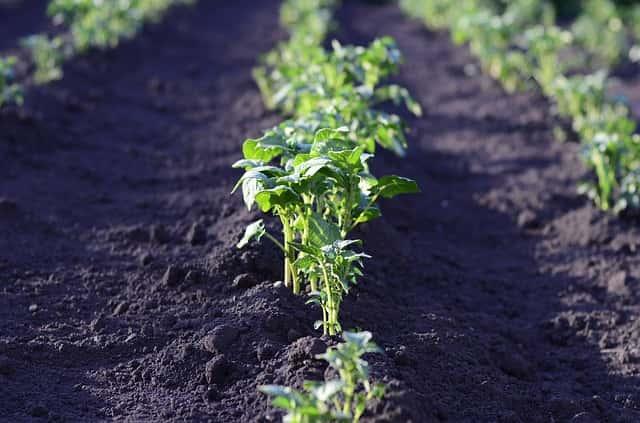 ふかふかな土と元気に育った野菜
