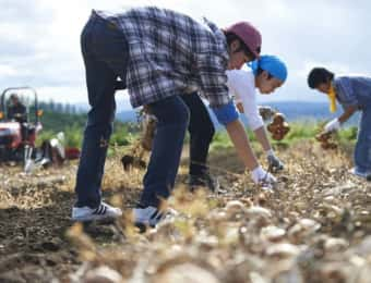 収穫作業をする男性たち