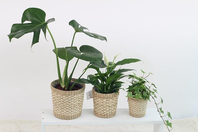観葉植物3種