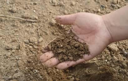 みかんの肥料を土に混ぜる