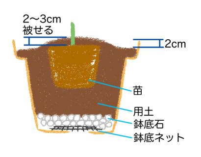 鉢植え、苗の植え付け