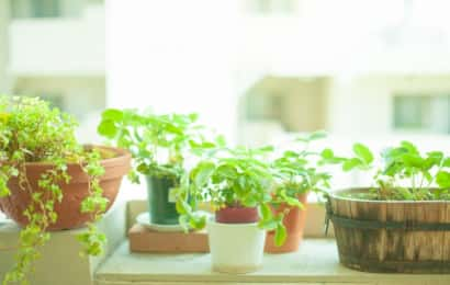 いろいろな形の植木鉢