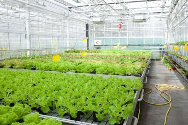 ハウス内で栽培されている作物