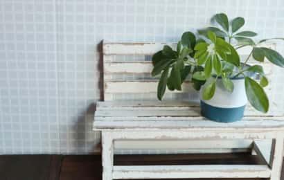 室内の鉢植え