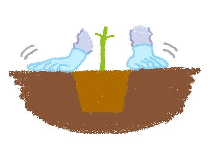 地植え、苗の植え付け