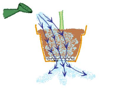 鉢植えの水やり