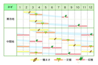 ネギ 新規就農レッスン 栽培カレンダー
