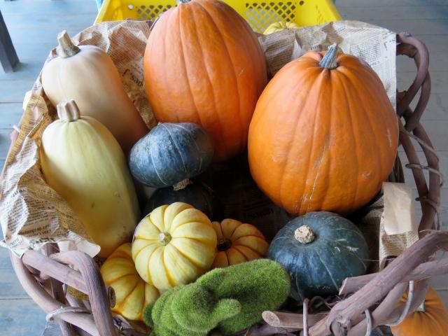 いろいろな種類のかぼちゃ