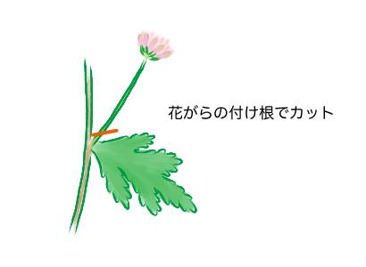 スプレーマム 、スプレー菊、花がら摘み