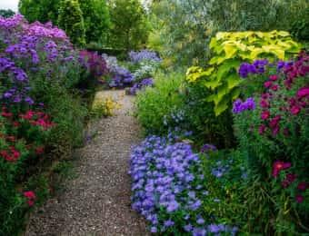 紫の花が美しい庭