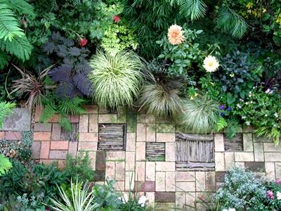 神奈川県の遠藤昭さんの庭に咲いた超巨大輪'天涯'