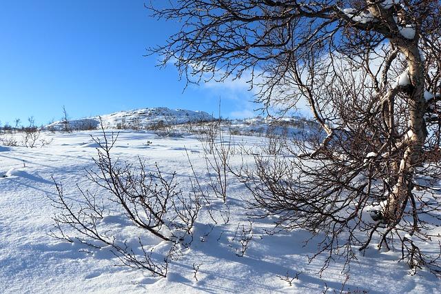 二十四節気、冬、農業