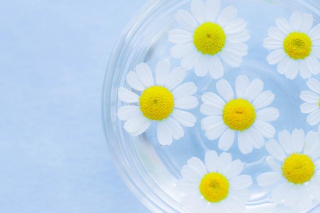 水に浮かべたカモミールの花