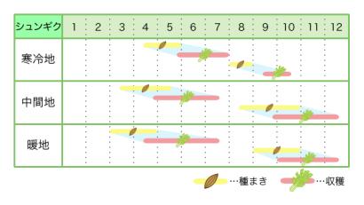 シュンギク 新規就農レッスン 栽培カレンダー
