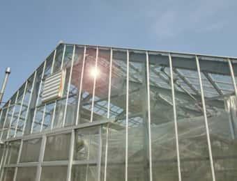 ハウス栽培、ガラス温室
