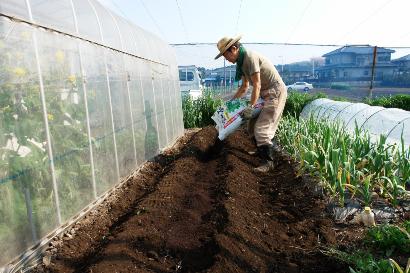 畝に肥料を入れる