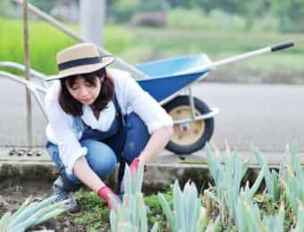 ネギを栽培する女性