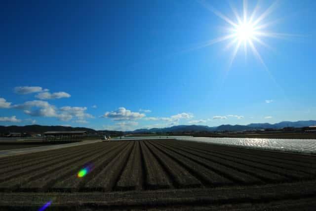 晴れた日の畑