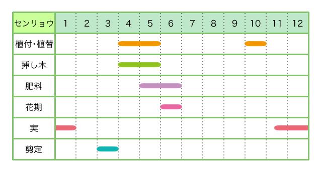 センリョウ、育て方、カレンダー
