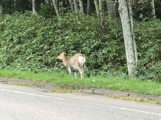道路を渡る鹿