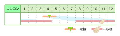 レンコン 新規就農レッスン 栽培カレンダー