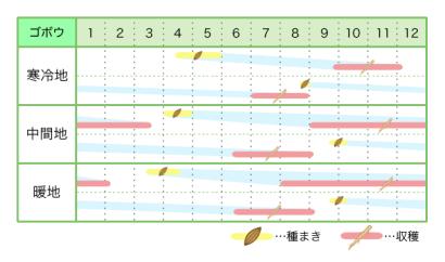 ゴボウ 新規就農レッスン 栽培カレンダー