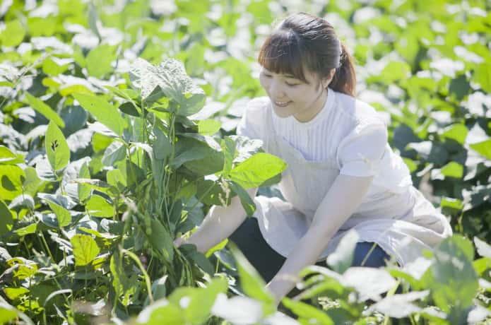 畑で野菜を育てる女性