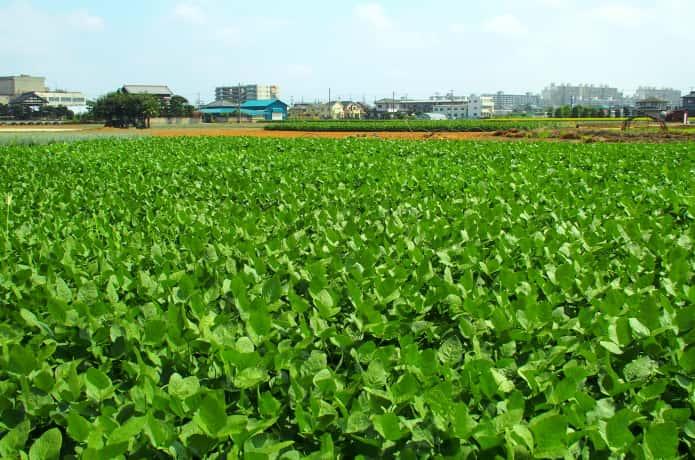 千葉県の畑