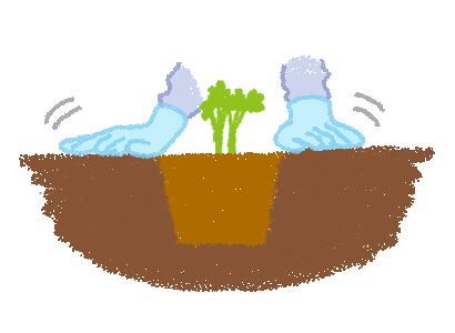 ヒューケラ 苗の植え付け