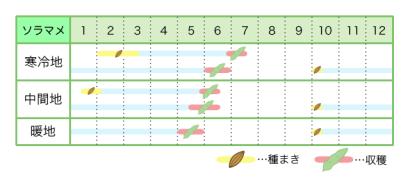 ソラマメ 新規就農レッスン 栽培カレンダー