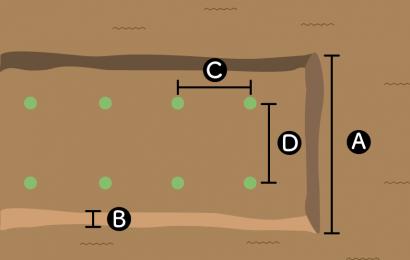 ダイコンの栽培スペース