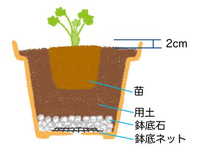 ヒューケラの植え付け