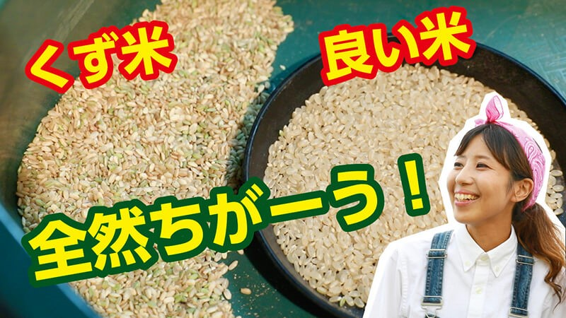 くず米と良い米の違い
