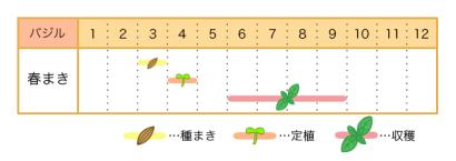 バジルの栽培カレンダー