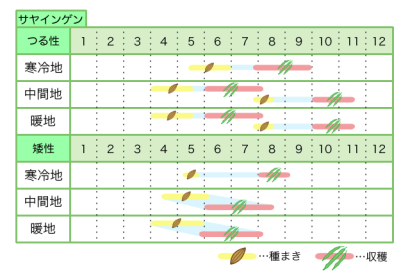 サヤインゲン 新規就農レッスン 栽培カレンダー