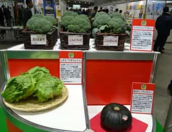 サカタフェア注目の野菜