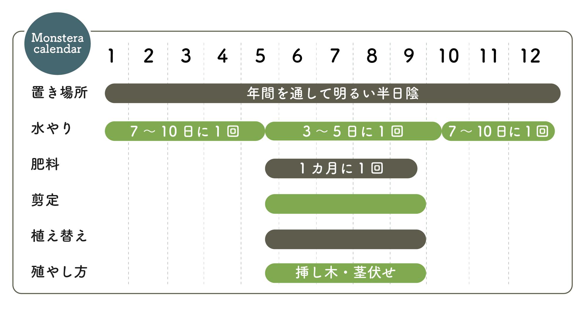 モンステラの栽培カレンダー