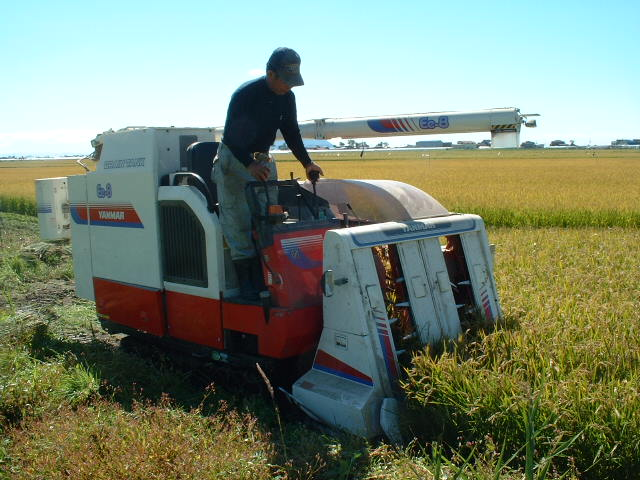 収穫、稲刈り