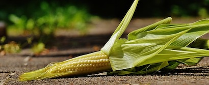 トウモロコシ 、ベビーコーン