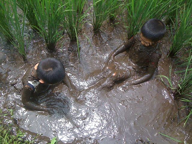 田んぼの中で遊ぶ子ども