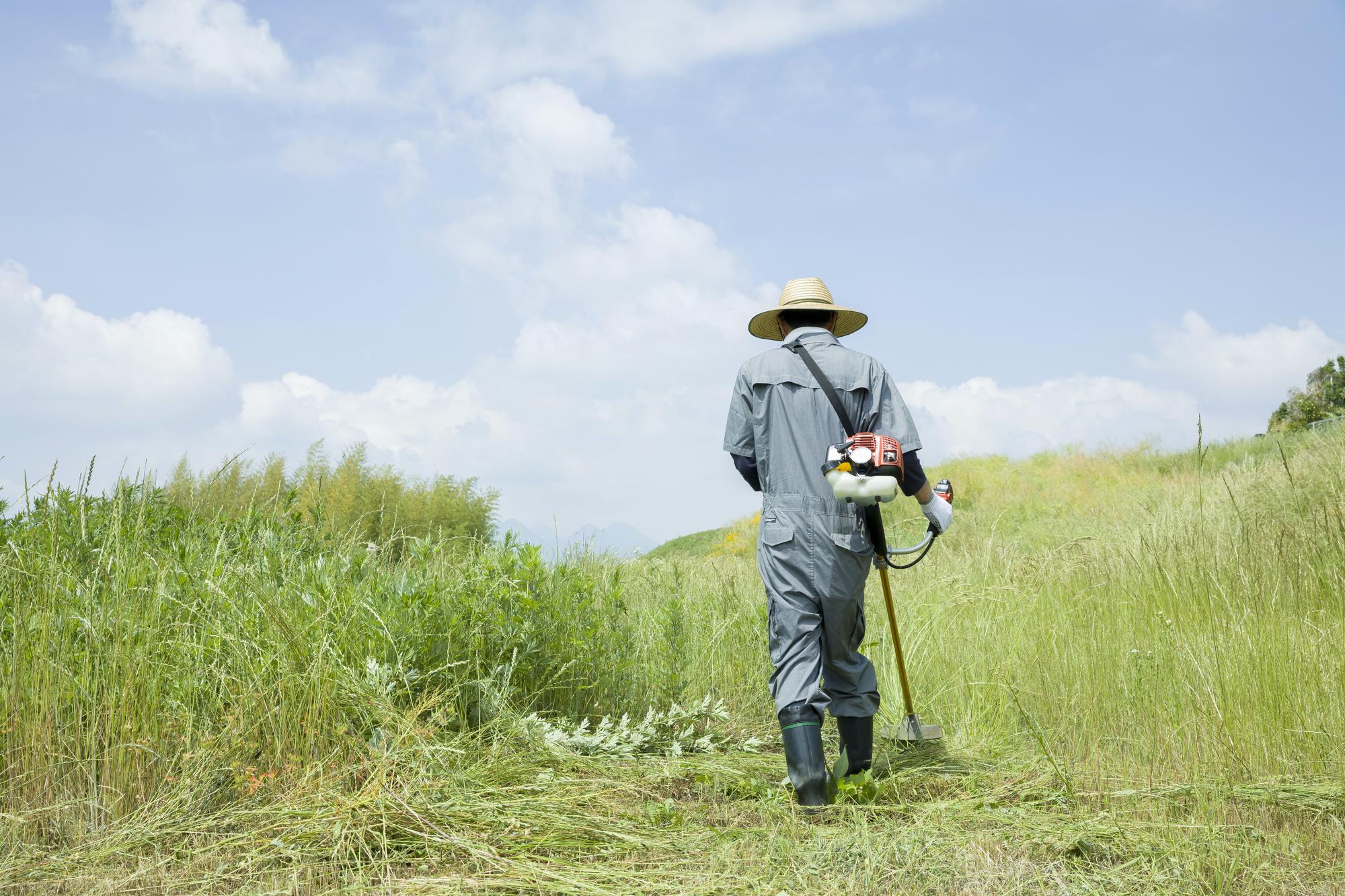 圃場の草刈り