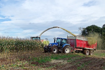 トウモロコシ、サイレージ用、収穫
