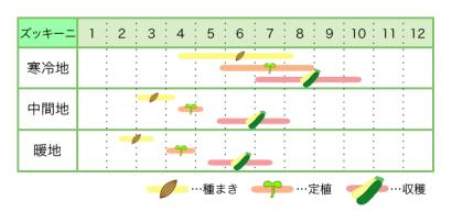 ズッキーニ 新規就農レッスン 栽培カレンダー
