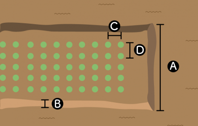 ニンジンの栽培スペース