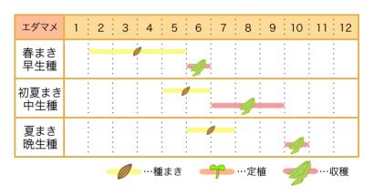 エダマメの栽培カレンダー