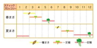 スティックブロッコリー栽培カレンダー